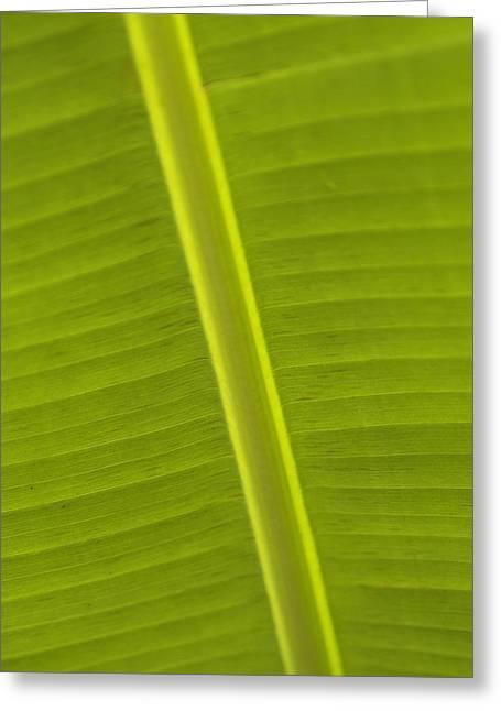 Detail Of Banana Leaf, Blue Mountains Greeting Card