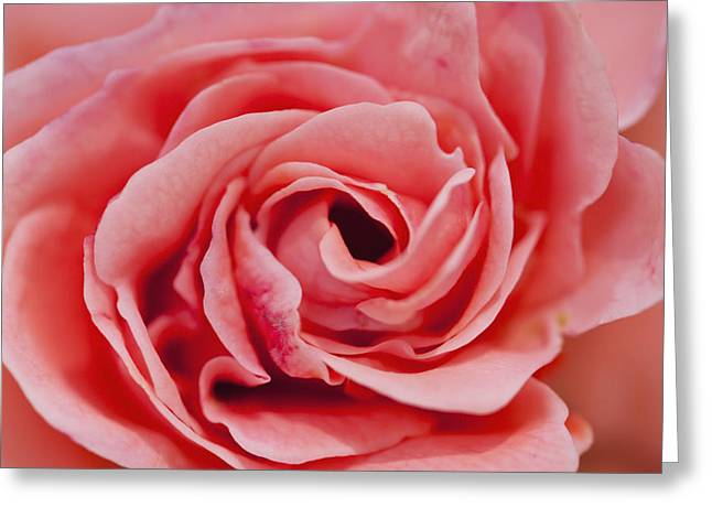 Detail Of Rose Flower Marrakech, Morocco Greeting Card by Ian Cumming