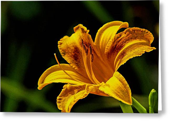 Detailed Lily Greeting Card by Dave Bosse