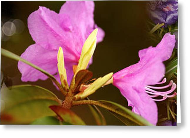 Details Of Early Spring Flowers Greeting Card by Panoramic Images