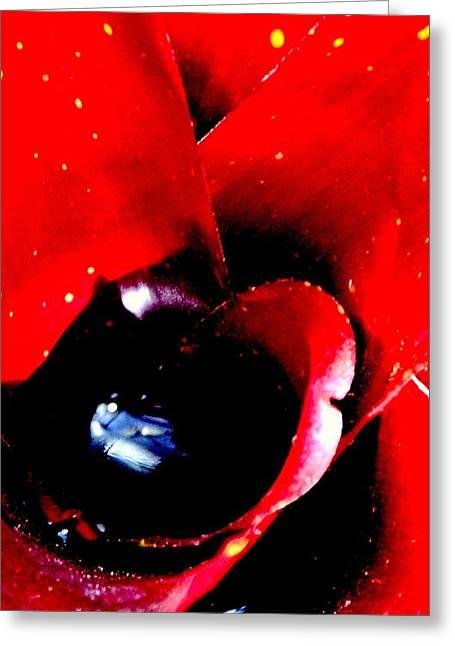 Devilish Eye Of The Bromeliad Greeting Card by Antonia Citrino