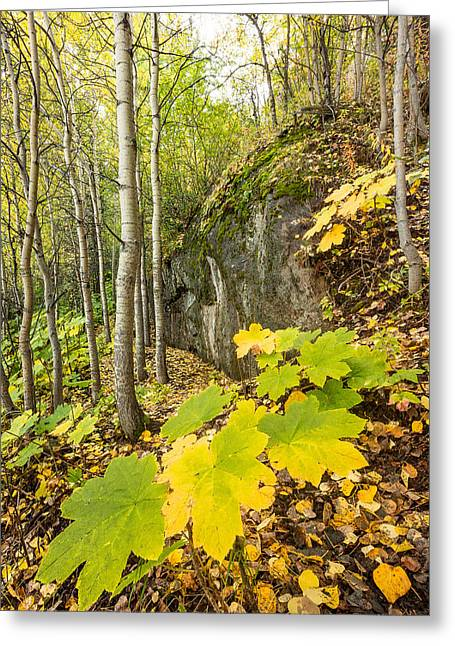 Devil's Club In Fall Greeting Card