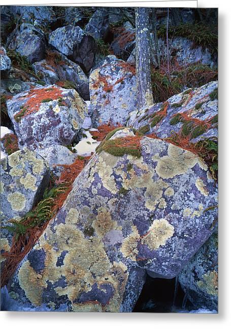 Devil's Lake Boulders Greeting Card