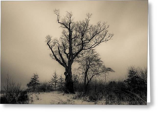 Devil's Tree Landscape Greeting Card by Jeffrey Miklush