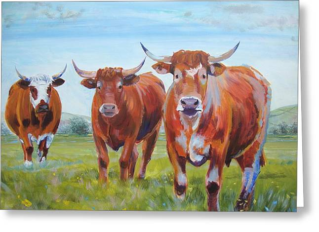 Devon Cattle Greeting Card