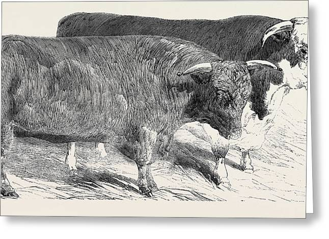 Devon, Class 1, First Prize, 40 Hereford Greeting Card