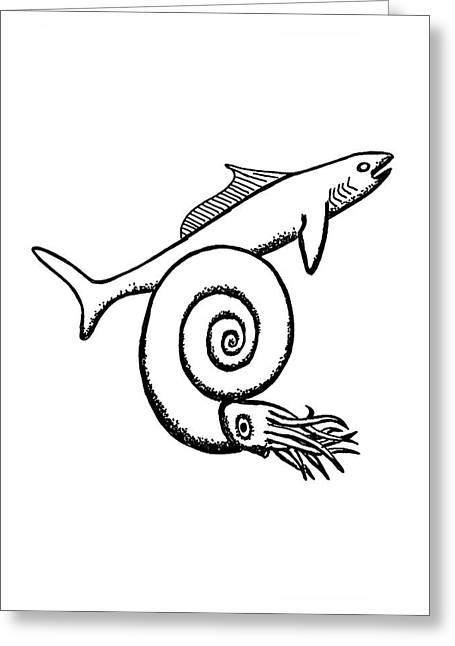 Devonian Shark And Ammonoid Greeting Card