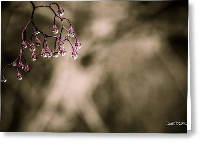 Dew Berries Greeting Card