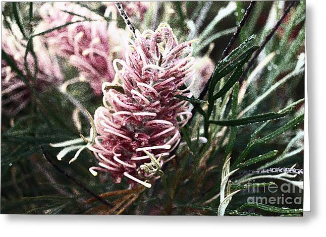 Dew Covered Grevillea Greeting Card
