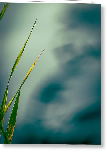 Dew Drop Greeting Card by Bob Orsillo
