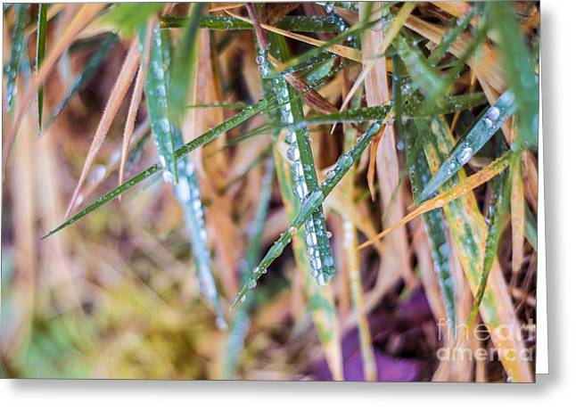 Dew Drop Color Greeting Card by Alanna DPhoto