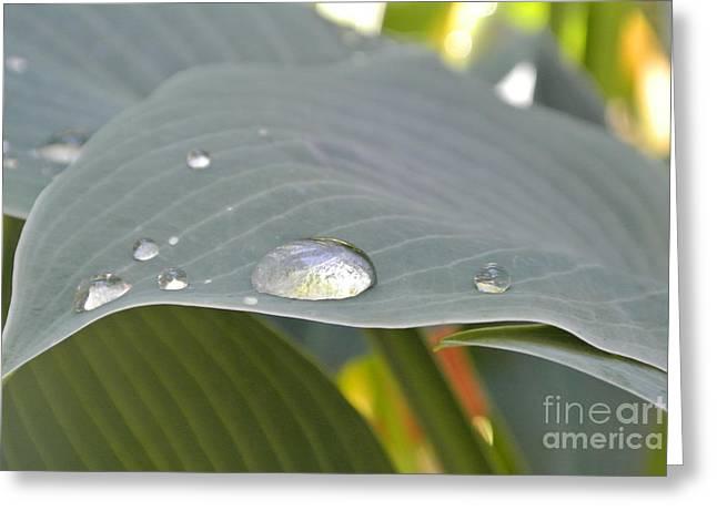 Dew Droplets Greeting Card