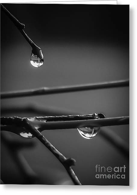 Dew Drops Greeting Card by Michael Canning
