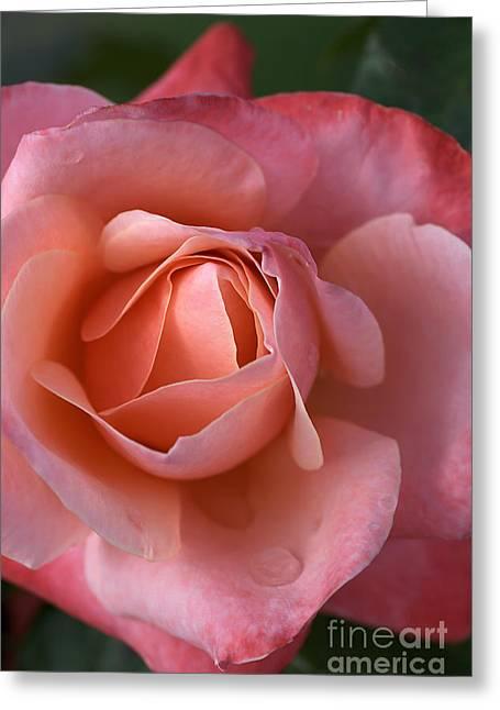 Dew Drops On My Petals Greeting Card by Joy Watson