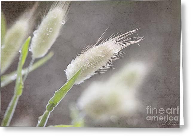 Dew Kissed Morning Greeting Card by Linda Lees