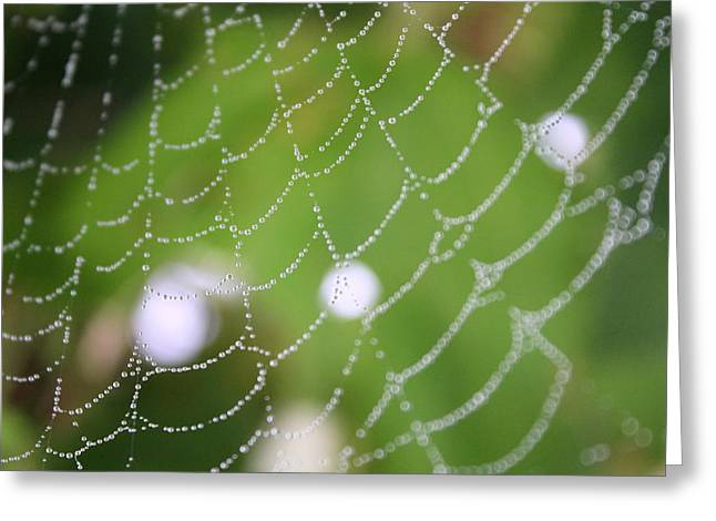 Dew On A Web  Greeting Card