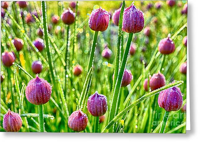 Dew On Blooming Chives Greeting Card by Thomas R Fletcher