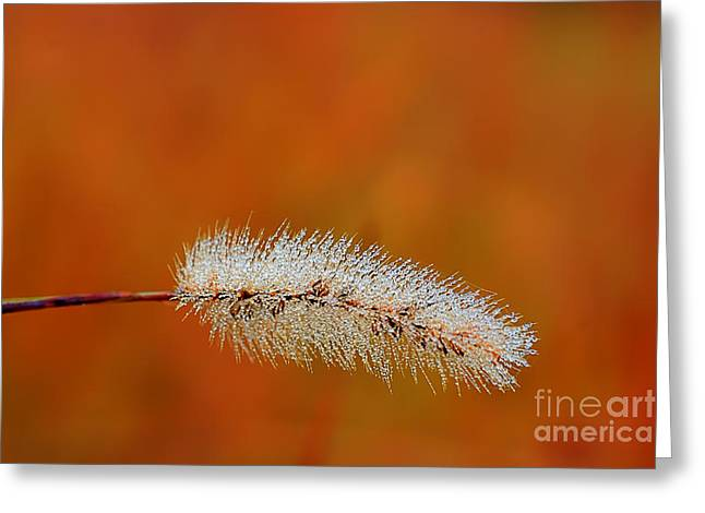 Dew On Grass Blade In Morning Greeting Card by Dan Friend