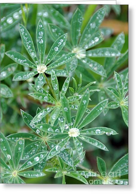 Dew On Leaves Greeting Card