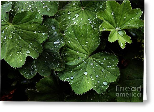 Greeting Card featuring the photograph Dew On Leaves by Tom Brickhouse