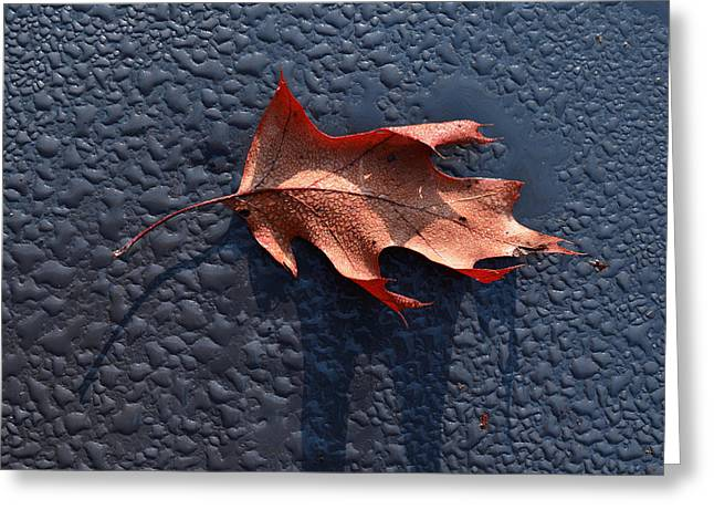 Dew Point Greeting Card by Tom Druin