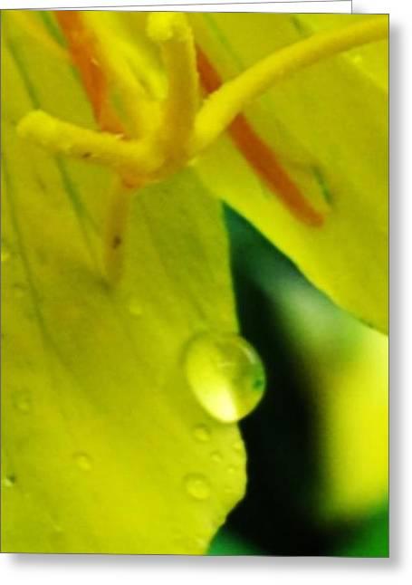 Dewdrop Greeting Card by Julia Gatti