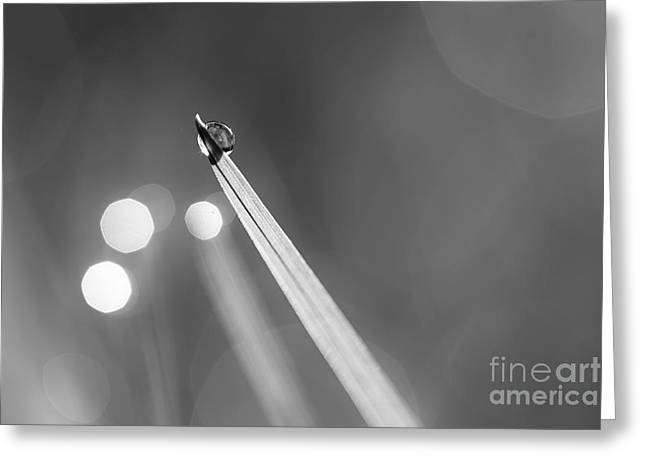 Dewdrop On Blade Of Grass With Sparkle - Black And White Greeting Card by Natalie Kinnear