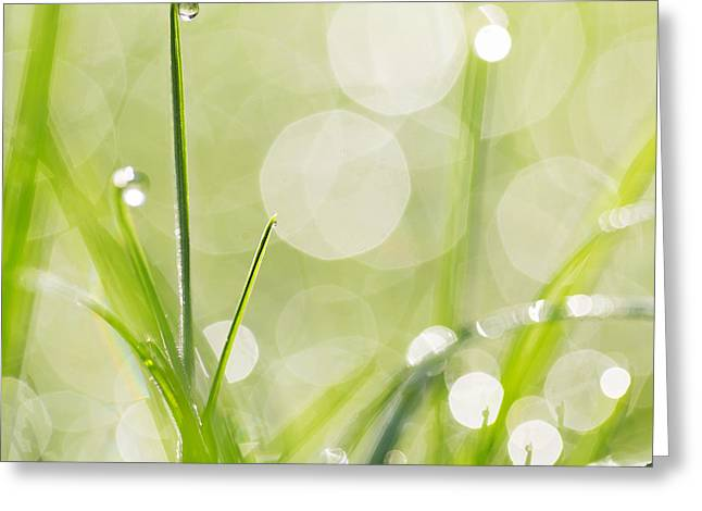 Dewdrops On The Sunlit Grass Square Format - Natalie Kinnear Pho Greeting Card by Natalie Kinnear