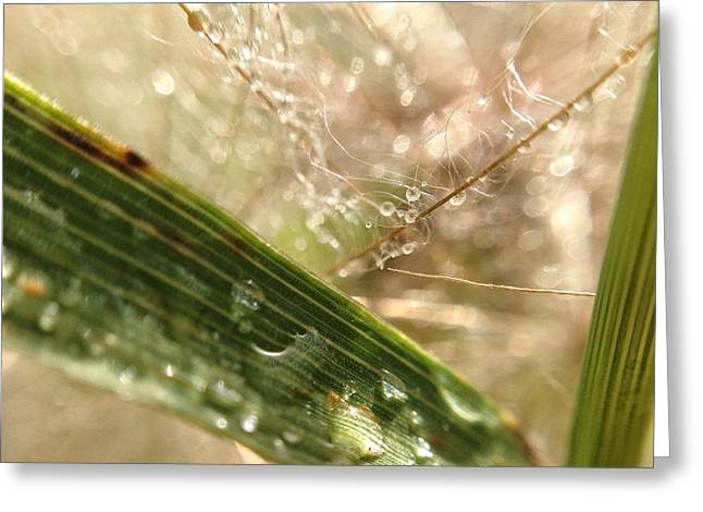 Greeting Card featuring the photograph Dewy Dandelions by Nikki McInnes