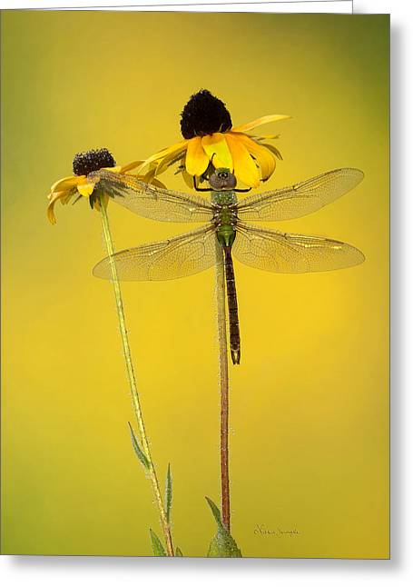 Dewy Darner Greeting Card