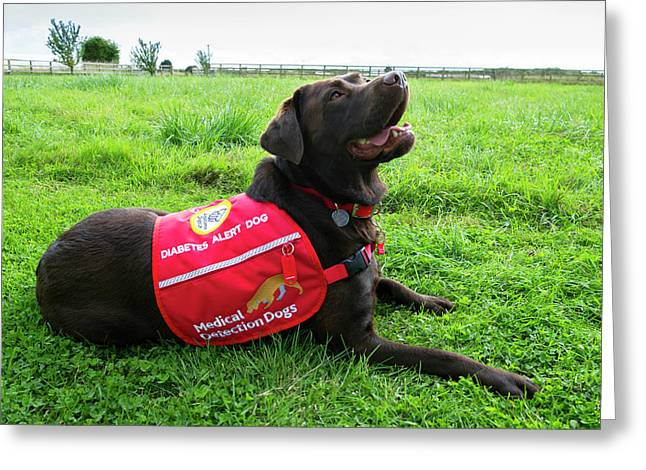 Diabetes Alert Assistance Dog Greeting Card by Louise Murray