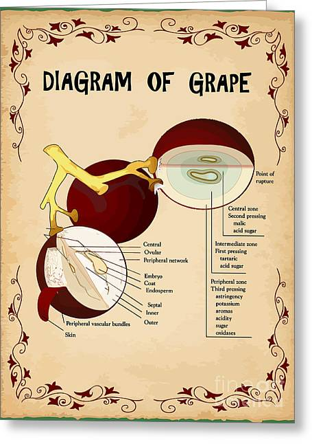 Diagram Of Grape Greeting Card by Indian Summer