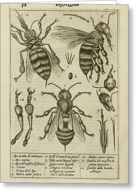 Diagrams Showing The Anatomy Of A Bee Greeting Card