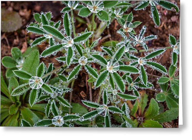 Diamond Flowers Greeting Card by Kelly Kitchens