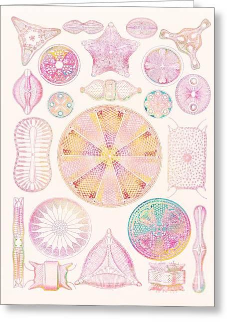 Diatoms Greeting Card by Mehau Kulyk