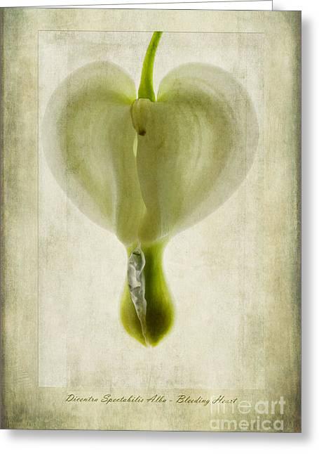 Dicentra Spectabilis Alba Greeting Card by John Edwards