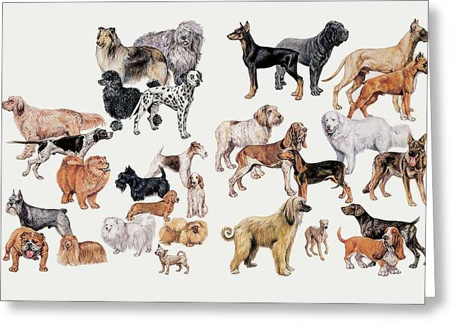 Different Breeds Of Dogs Greeting Card by Deagostini/uig/science Photo Library