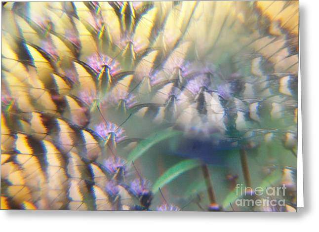 Digital Art Abstract With Swallowtail Greeting Card
