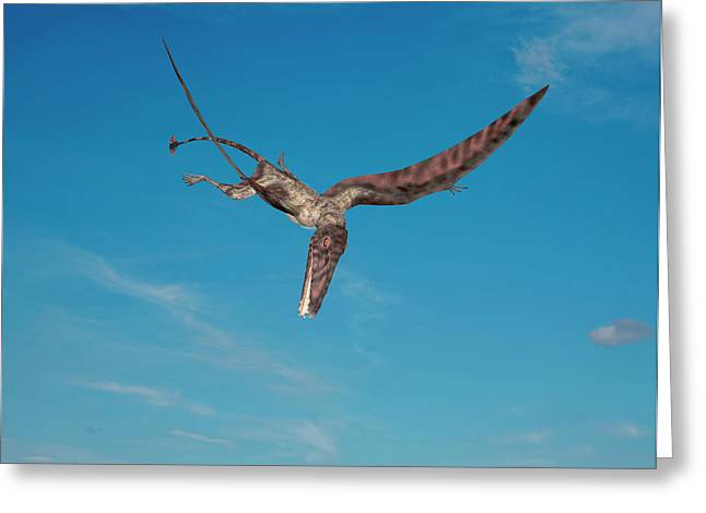 Dimorphodon Pterosaur Greeting Card