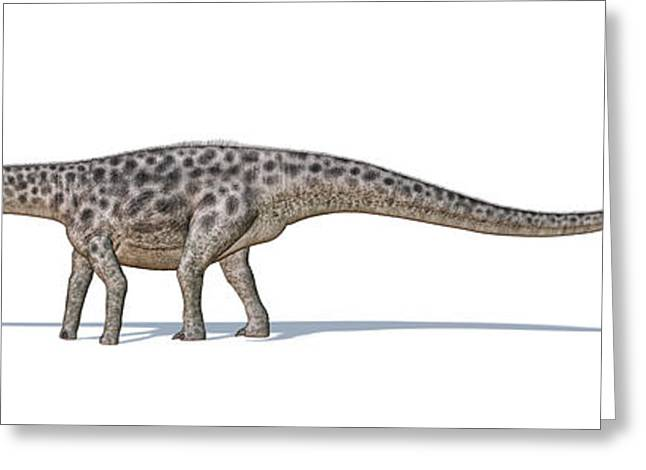 Diplodocus Dinosaur On White Background Greeting Card by Leonello Calvetti