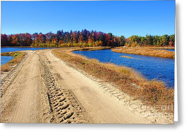 Dirt Road In Marsh Greeting Card by Olivier Le Queinec