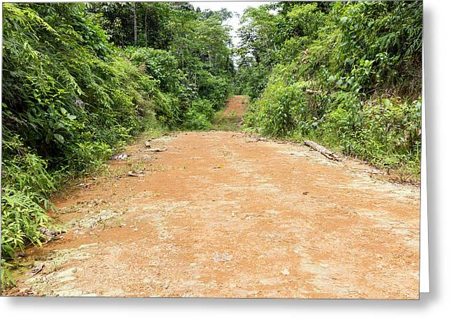 Dirt Road Leading Into The Rainforest Greeting Card by Dr Morley Read