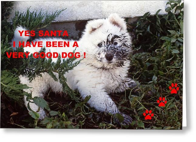 Dirty Dog Christmas Card Greeting Card
