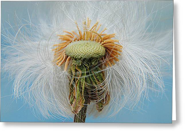 Disheveled Greeting Card by Frozen in Time Fine Art Photography