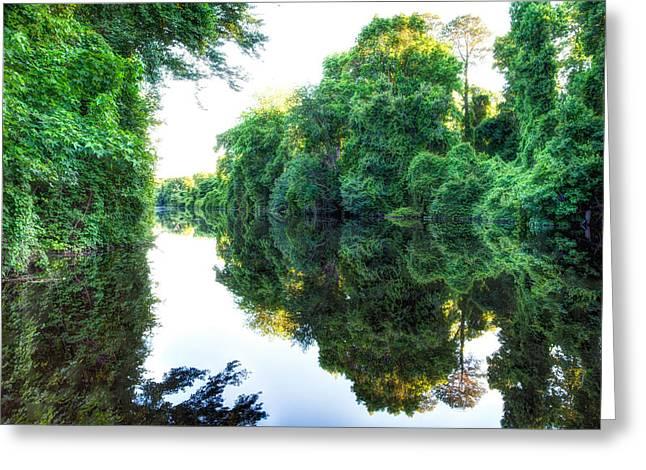 Dismal Swamp Canal Greeting Card by David Cote