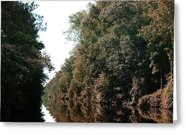 Dismal Swamp Canal Greeting Card by Rebecca Davis