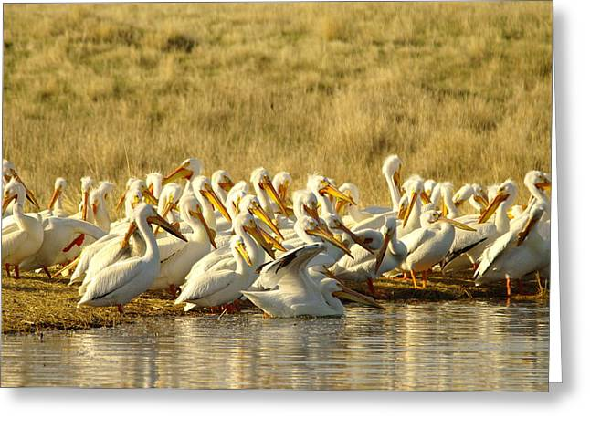 Disrupting The Pelican Socail Gathering Greeting Card