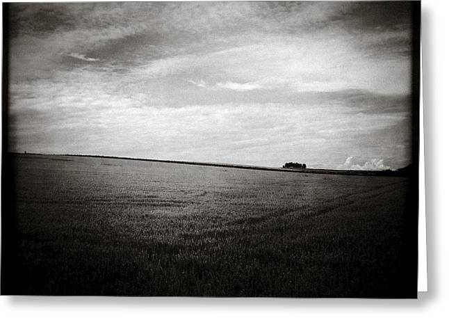Distant Trees Greeting Card by Dave Bowman