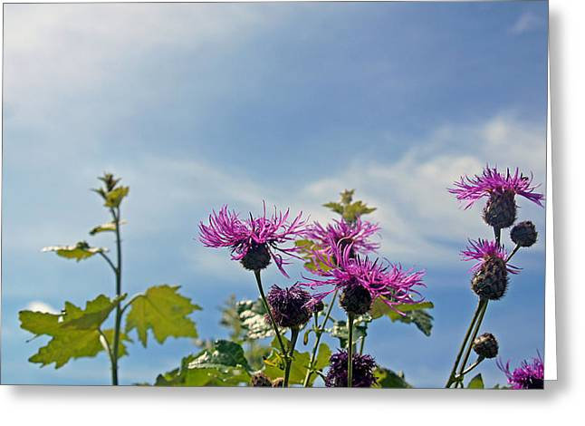 Distel Greeting Card by Kees Colijn