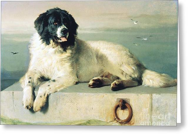 Distinguished Member Of The Humane Society Greeting Card by Pg Reproductions
